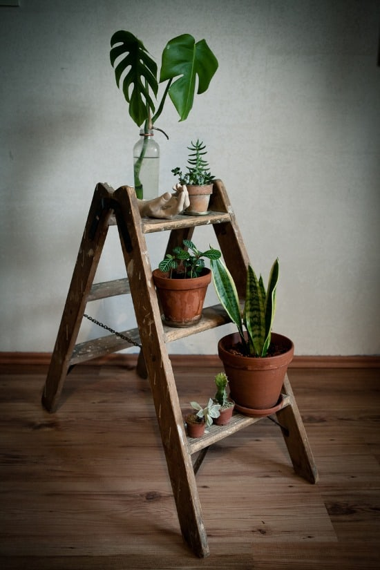 vintage step ladder as plant stand
