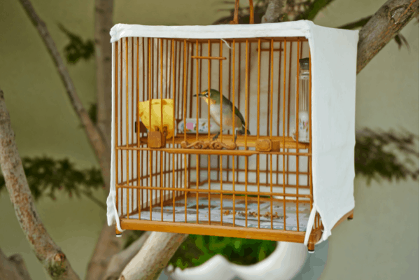 How Can Birds Help the Vibe and Décor Of Your Home