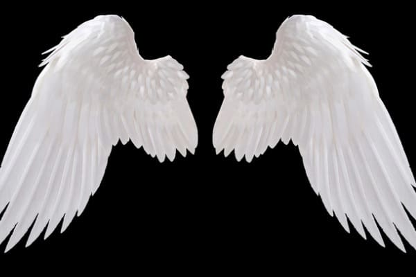 Long Feathered Angel Wings