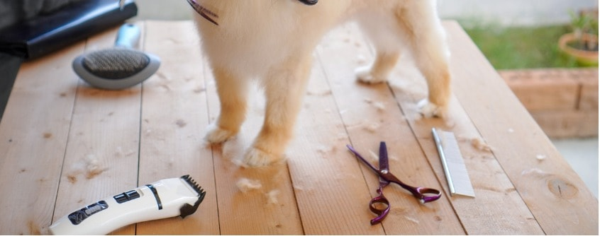Dog grooming table ideas