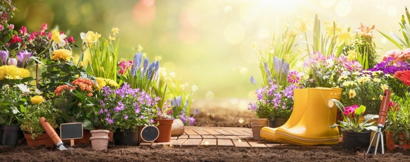 gardening-concept-garden-flowers-and-plants-on-a-sunny