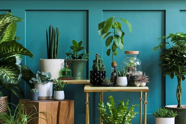 green plants in your house