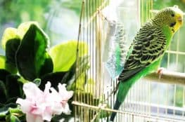 home decor and bird cages