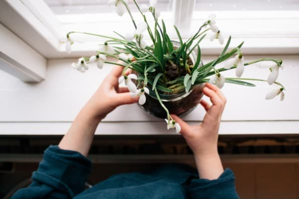 placing new house plant